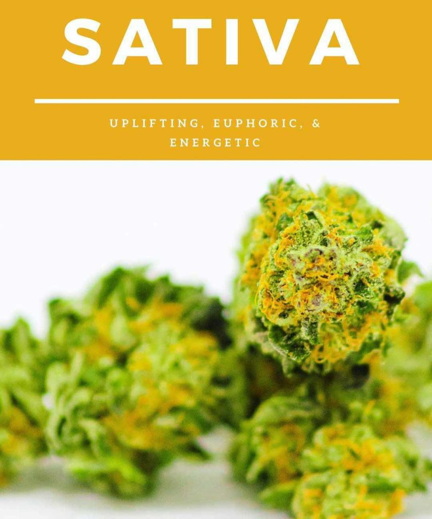Sativa marijuana flower is uplifting, euphoric and energetic