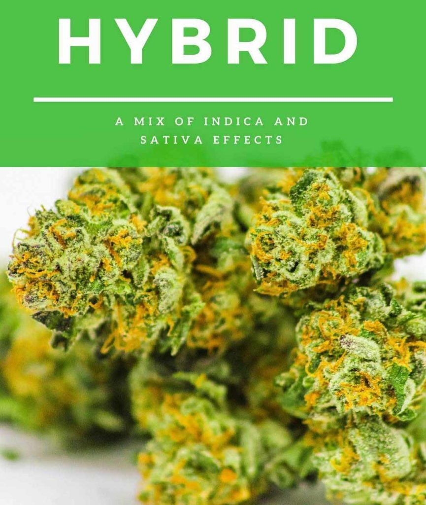 Hybrid marijuana flower is a mix of indica and native effects